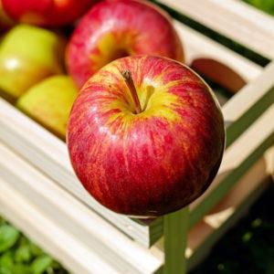 humboldt_apple