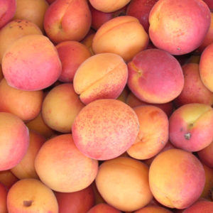 humboldt_apricots