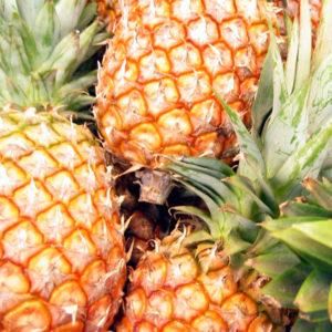 humboldt_pineapple