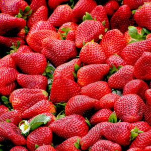 humboldt_strawberries
