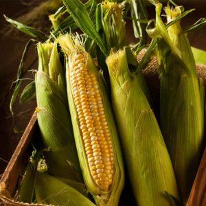 Humboldt-corn-importers